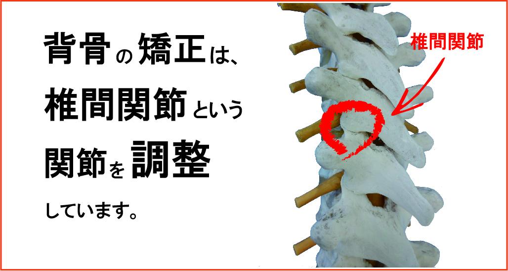 背骨矯正治療 骨盤矯正治療 椎間関節 腰痛 肩こり 猫背 姿勢 改善 頭痛 合格 面接 ジム ヨガ ピラティス